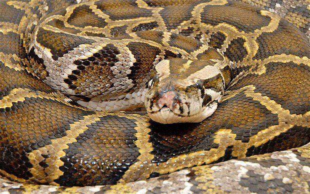 woman sleeps with snake 2