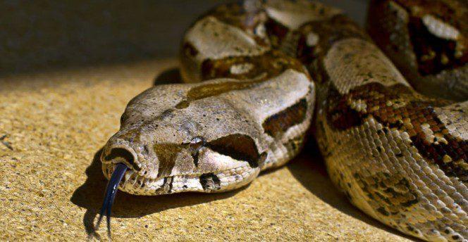 woman sleeps with snake 7