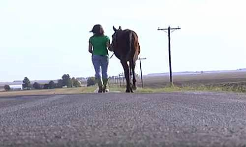 Girl saves a horse2
