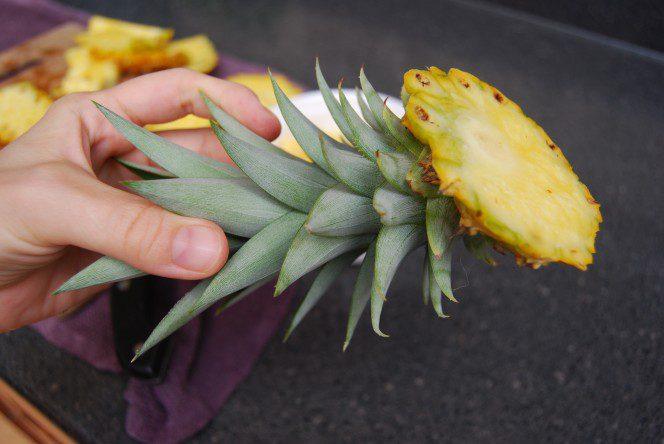 Grow a pineapple2