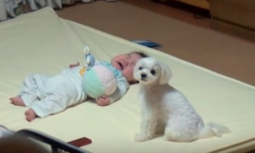 Puppy and crying baby1