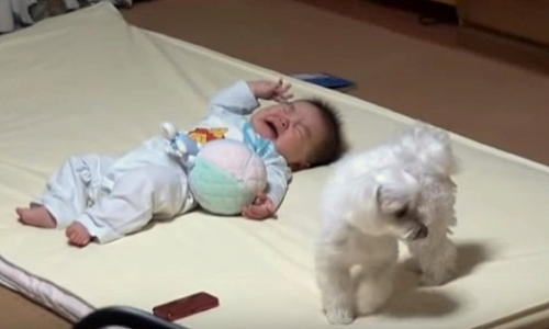 Puppy and crying baby2