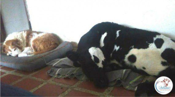 Puppy found in the woods9