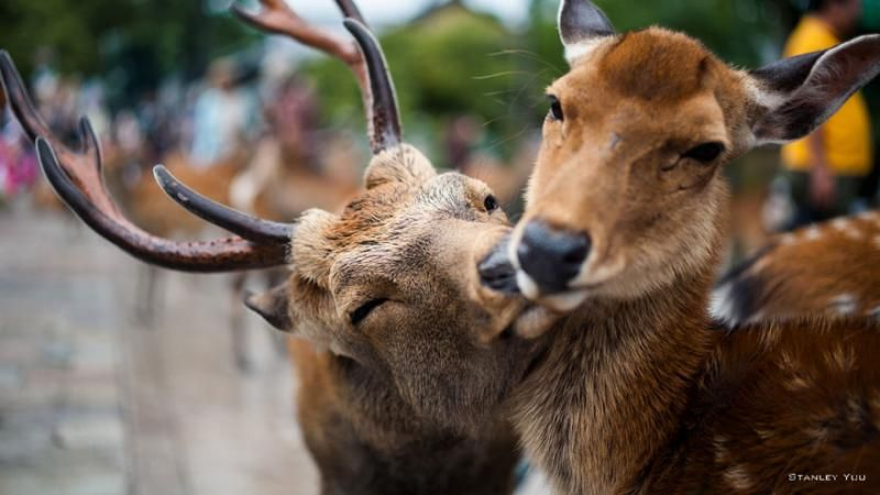 animals kissing 14