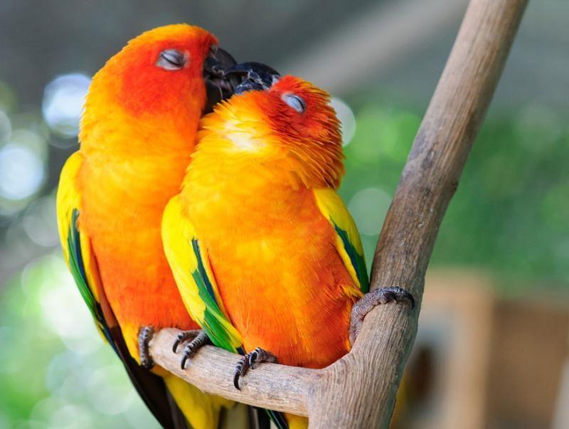 animals kissing 3