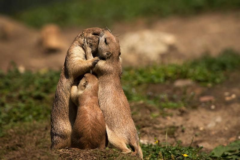 animals kissing 5