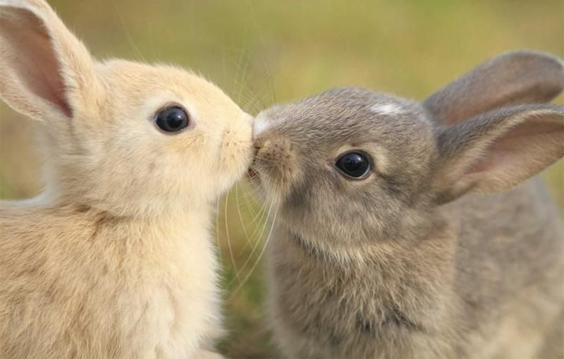 animals kissing 7