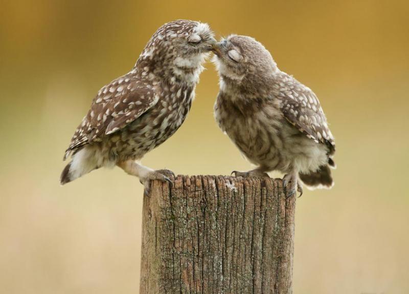 animals kissing 8