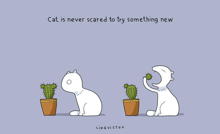 benefits of having cat 11