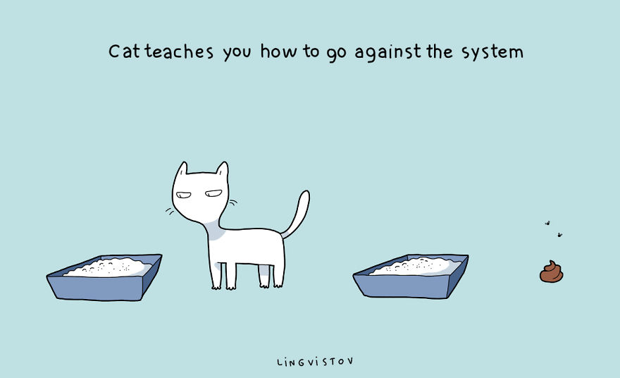 benefits of having cat 8