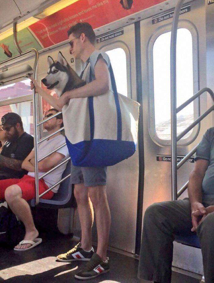 dog in a bag subway 1