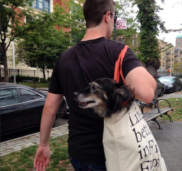 dog in a bag subway 2