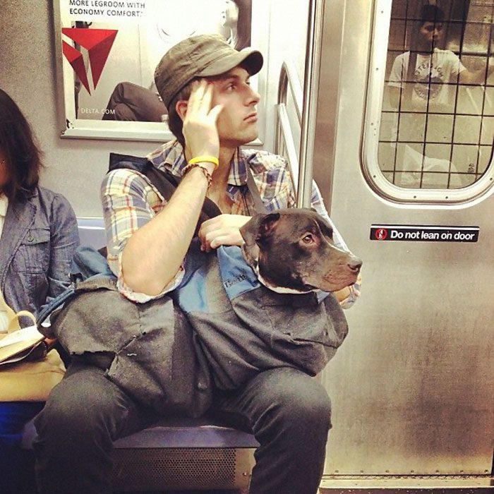 dog in a bag subway 3