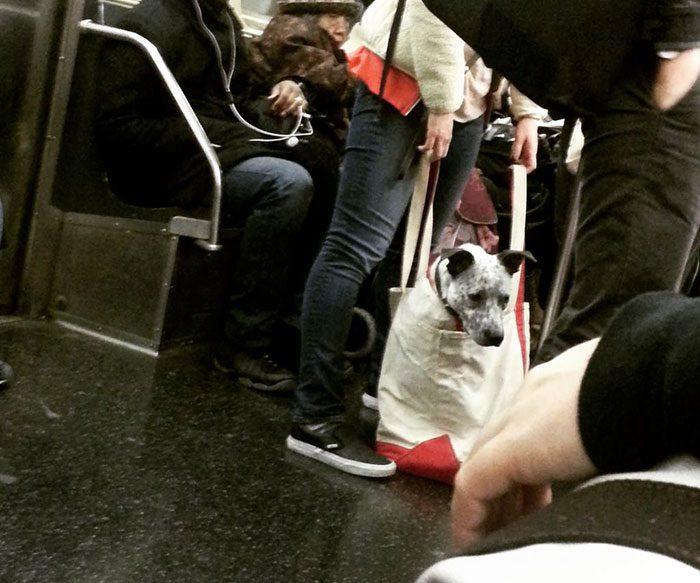 dog in a bag subway 4
