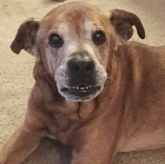Dog adoption2