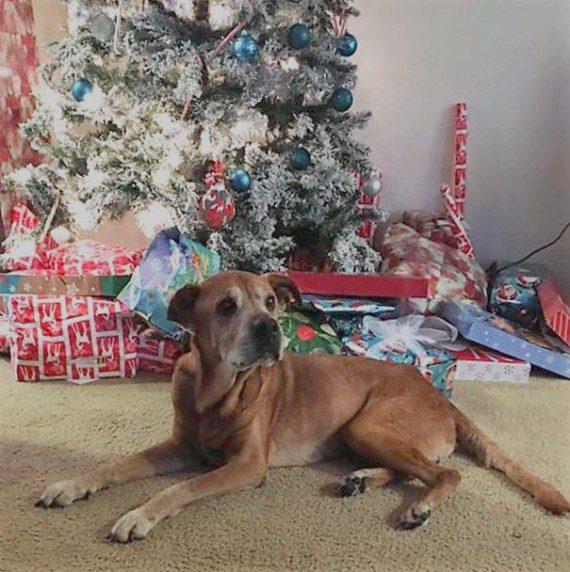 Dog adoption5