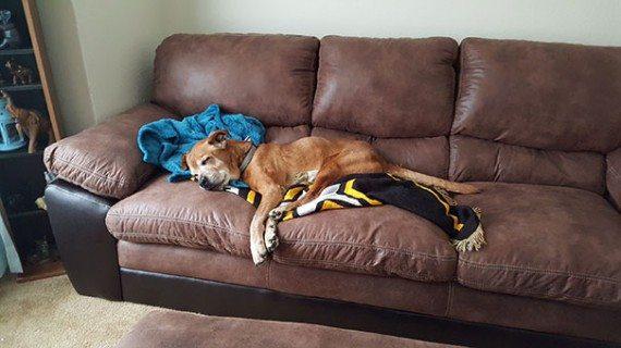 Dog adoption6