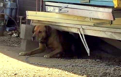 Dog rescue1