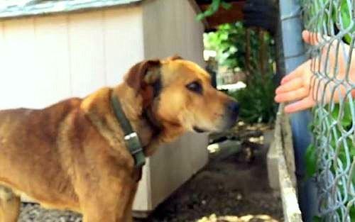 Dog rescue2