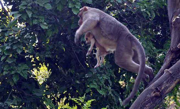 Monkey adopt dog4