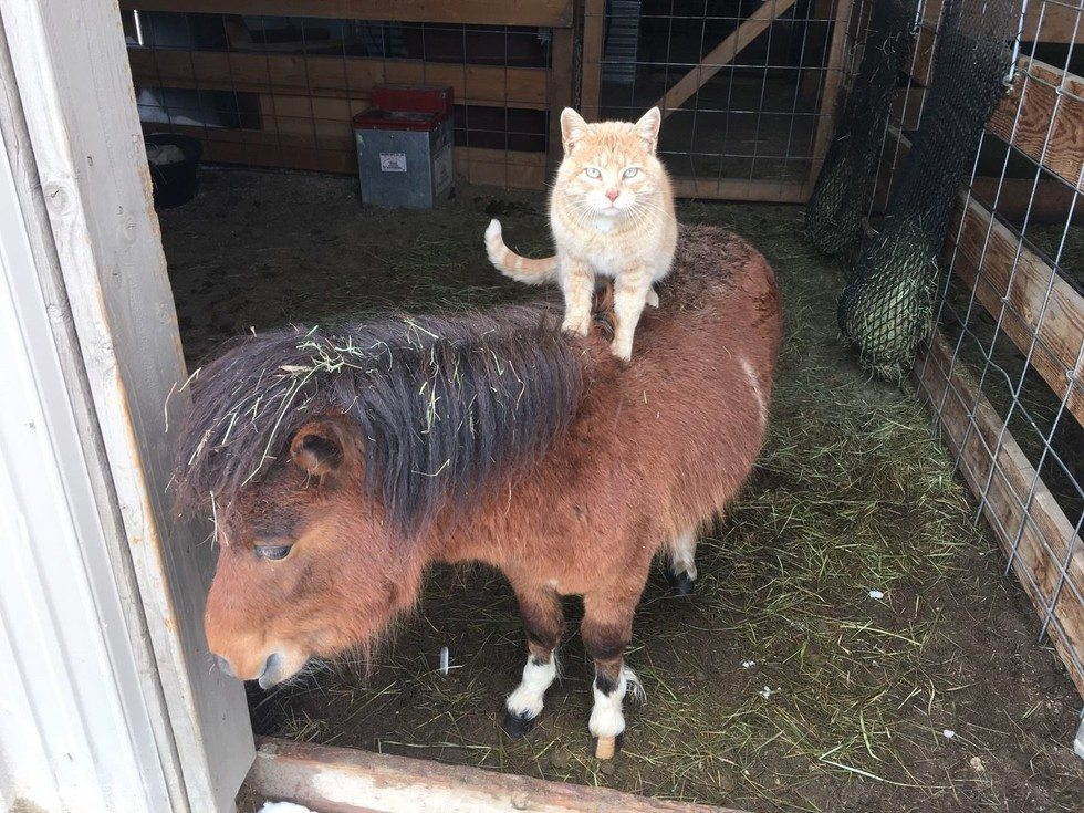 animals carry cat1
