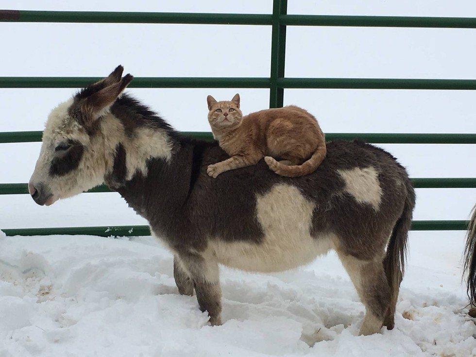 animals carry cat3