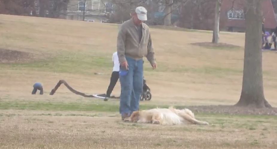 dog doesnt want leave park1