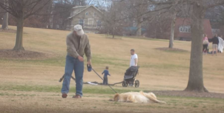 dog doesnt want leave park2