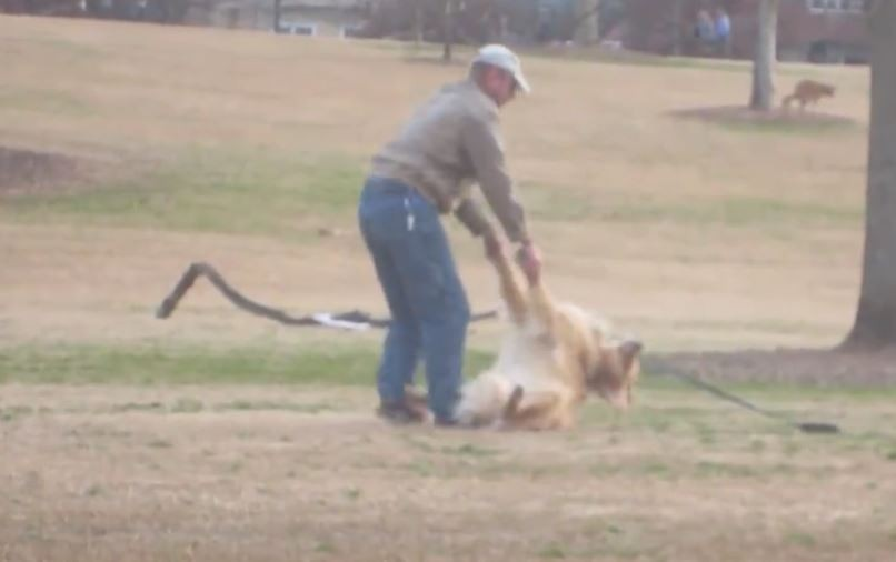 dog doesnt want leave park3