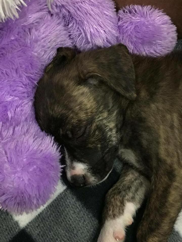 officer rescued stray puppy4