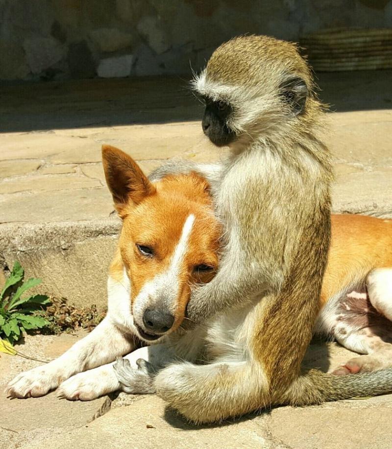 rescued monkey1