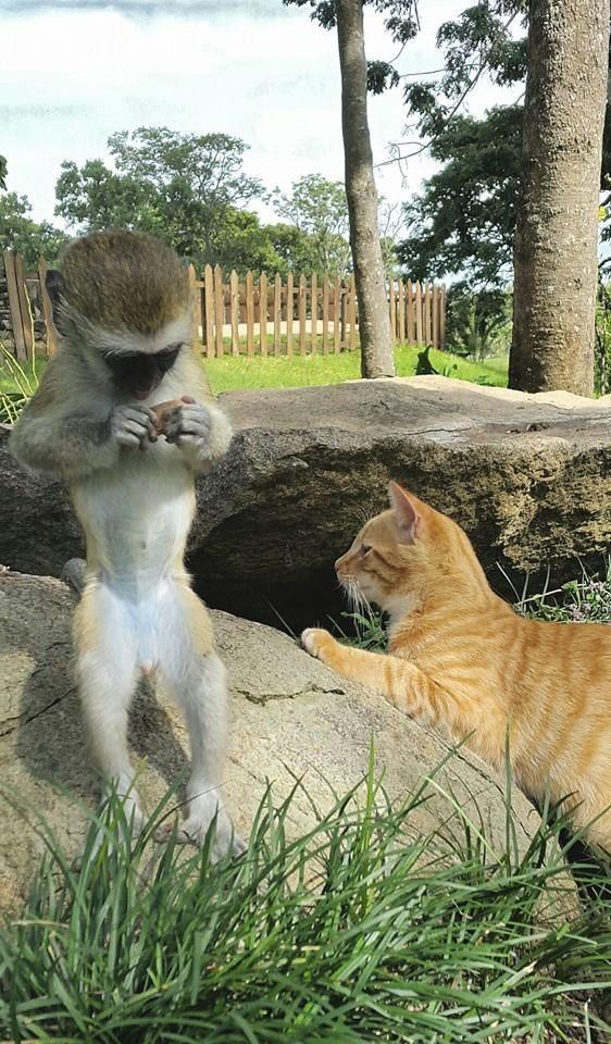 rescued monkey10
