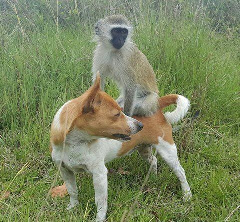 rescued monkey12