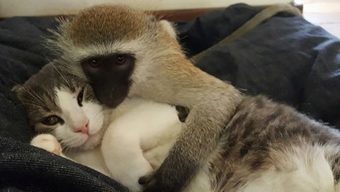 rescued monkey13