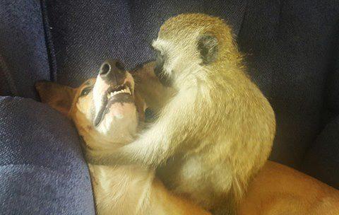 rescued monkey14