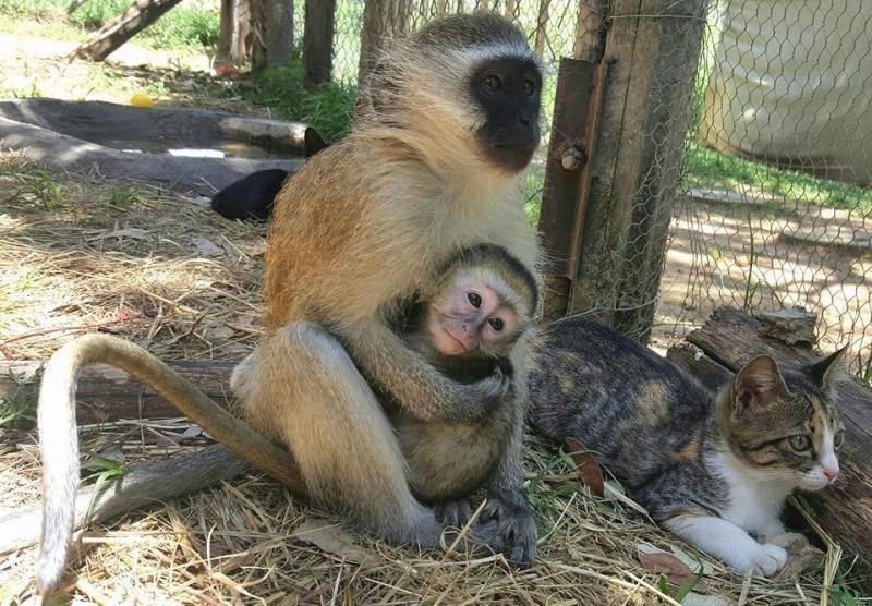 rescued monkey16