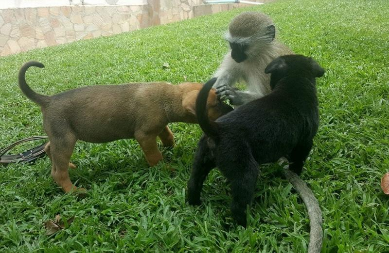 rescued monkey17