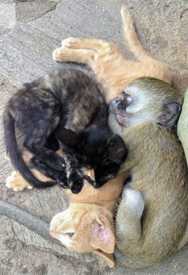 rescued monkey2