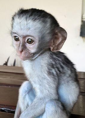 rescued monkey5