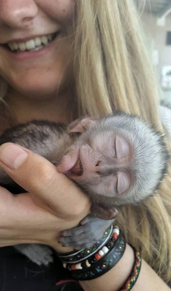 rescued monkey6
