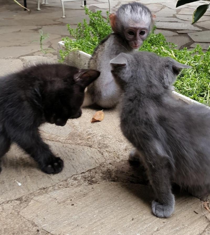 rescued monkey7