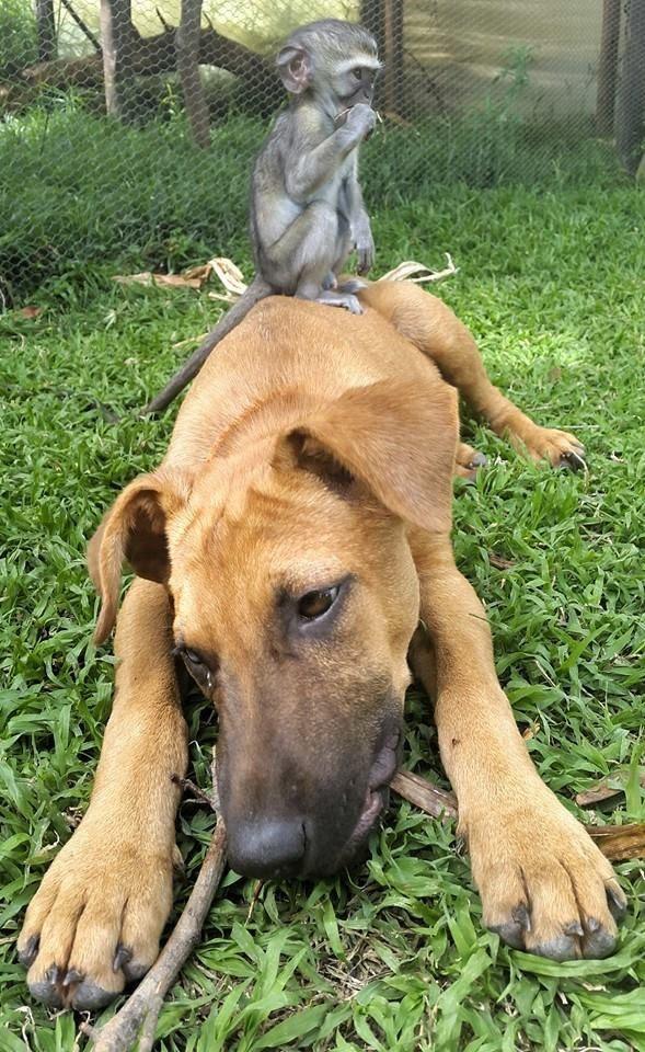 rescued monkey8