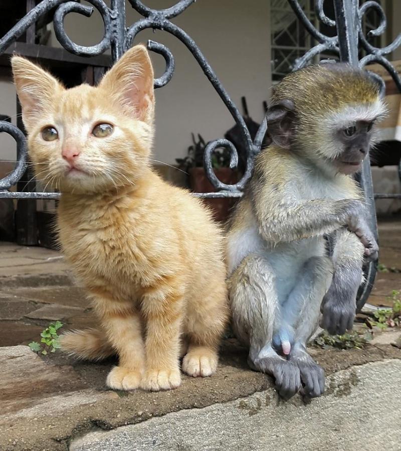 rescued monkey9