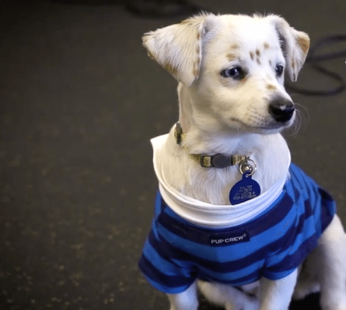 deaf-girl-adopts-dog1