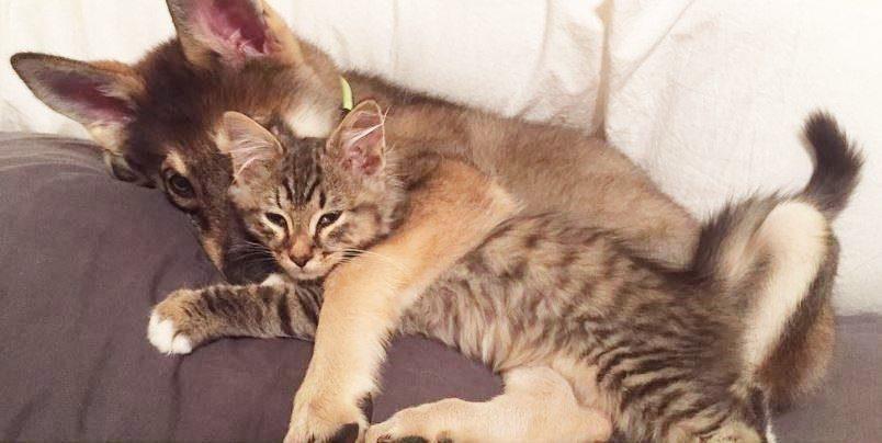 dog-adopts-shelter-kitten1