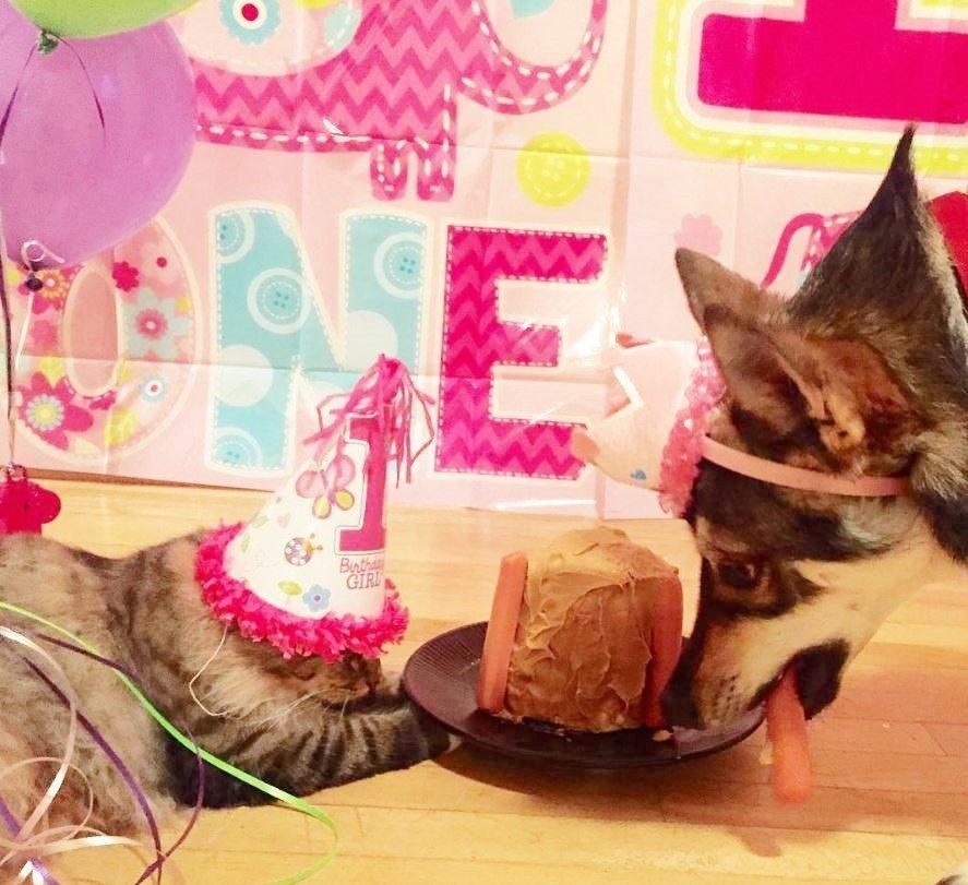 dog-adopts-shelter-kitten6