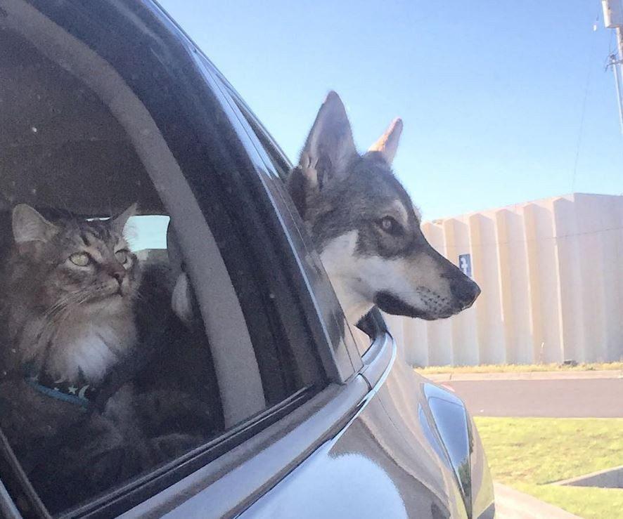 dog-adopts-shelter-kitten7