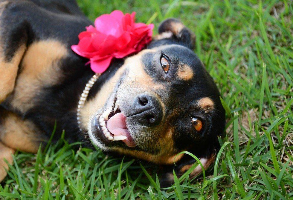 dog-maternity-photo-shoot3
