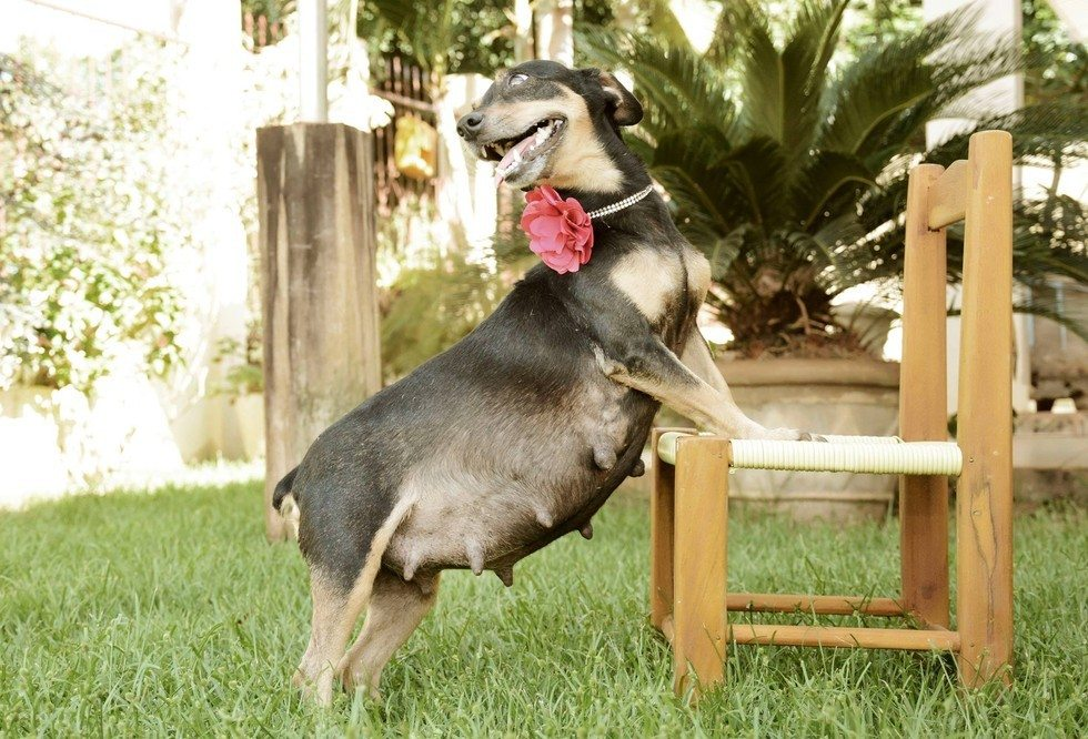 dog-maternity-photo-shoot5
