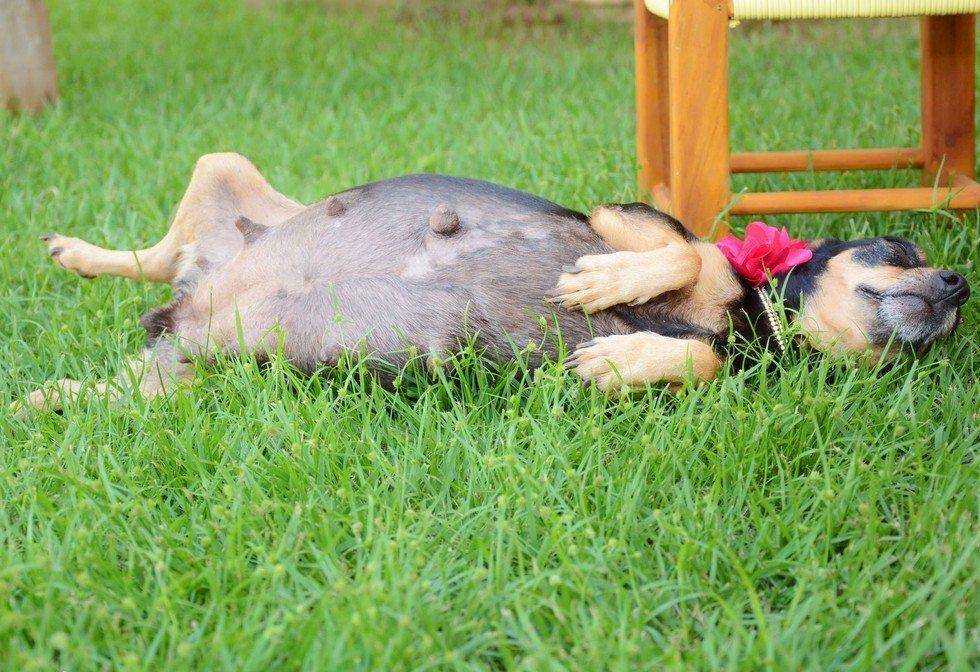 dog-maternity-photo-shoot7